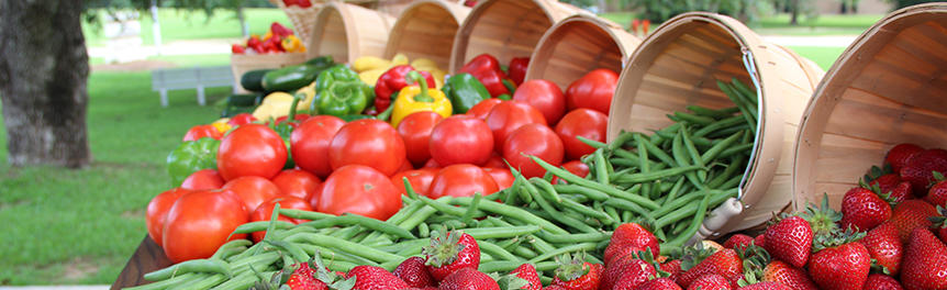 Eylül Ayının Sebze Ve Meyveleri